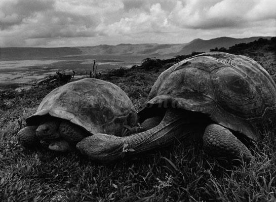 Il sale della terra, il documentario su Salgado